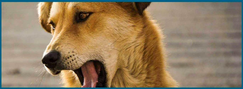 Ladridos de perros asociados al síndrome de disfunción cognitiva