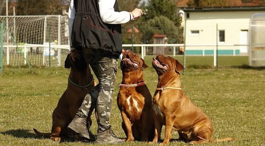 Adiestrador perros
