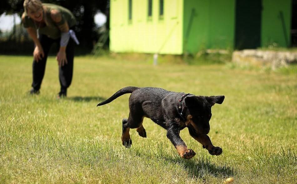 educa cachorros. Educación de cachorros y adiestramiento de perros desde pequeños. Cómo enseñar a tu perro