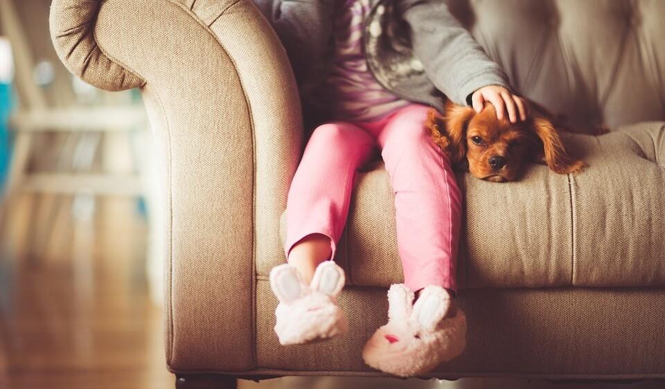 educar cachorro. Educación de cachorros para que no se suban al sofá ni a la cama. Educación de cachorros para modificar conductas dese pequeños