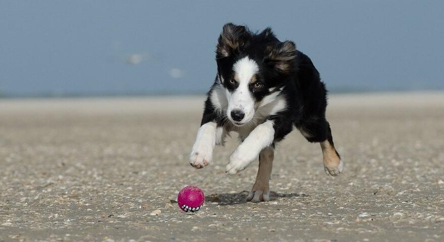 entrenar a un cachorro. El deporte es muy bueno para los cachorros porque les ayuda a crecer sanos y a estar tranquilos en casa. Trucos y consejos para entrenar perros desde pequeños