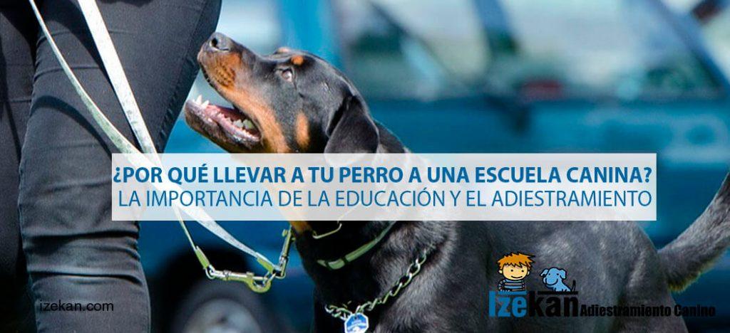 ¿Por qué llevar a tu perro a una escuela canina? La importancia de la educación y el adiestramiento