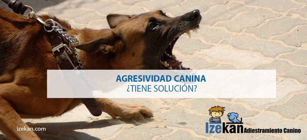 Agresividad canina ¿Tiene solución?