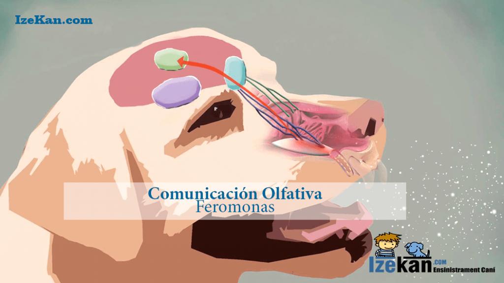 Comunicación-Olfativa_Feromonas
