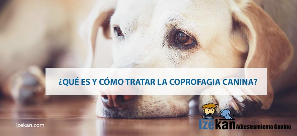 ¿Qué es y cómo tratar la coprofagia canina?