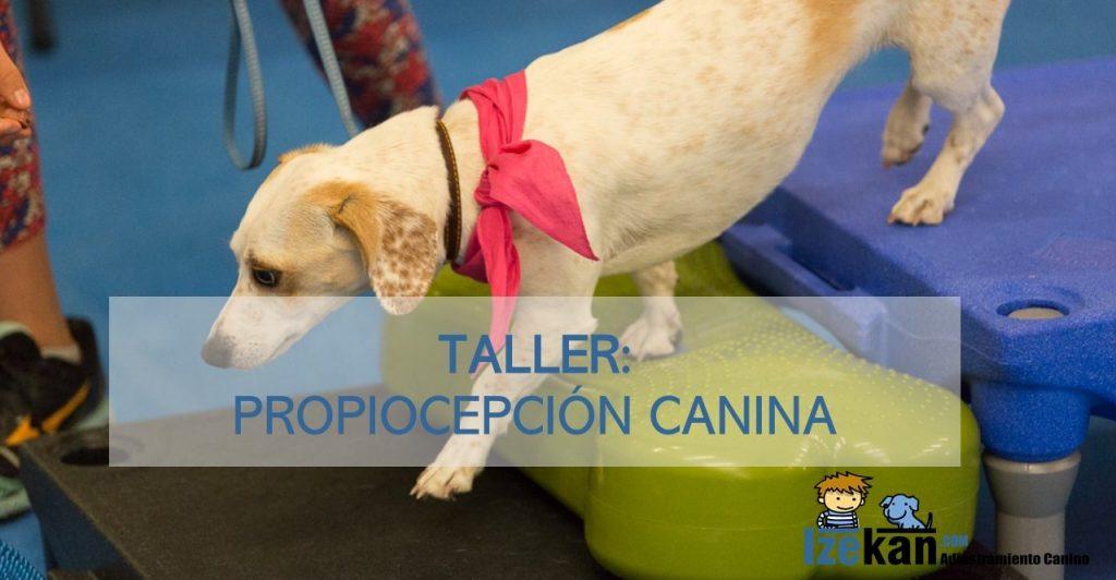 Taller Propiocepción canina