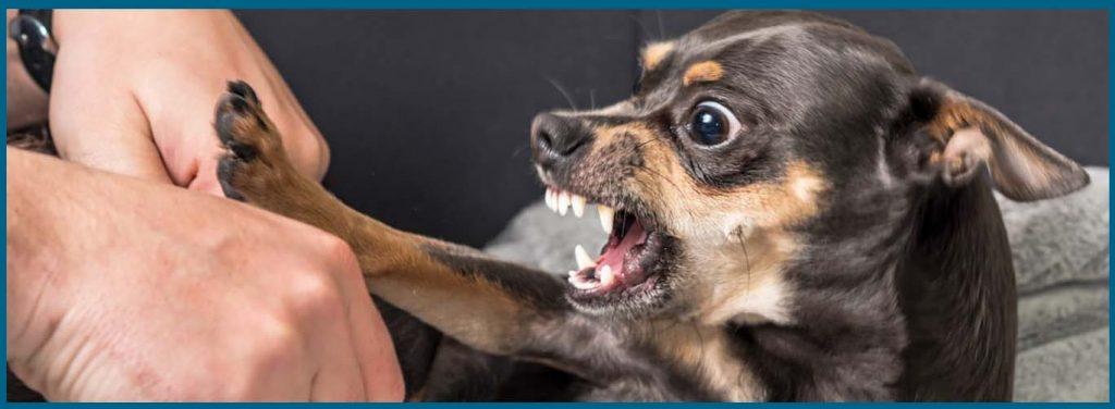 caninos agresivos