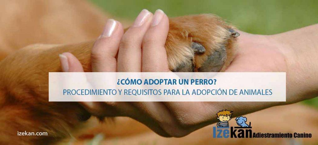 como-adoptar-un-perro