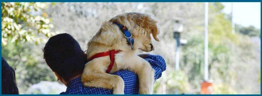 conducta de los perros