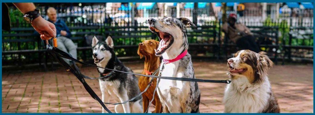cómo hacer que tu perro no tire de la correa