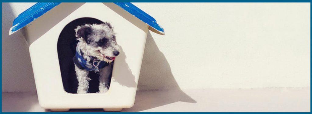 cómo enseñar a un perro a hacer sus necesidades