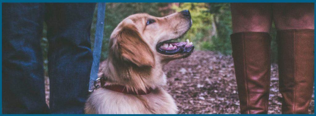 cuanto dura el celo de una perra