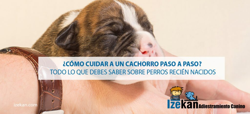 cuidar cachorros