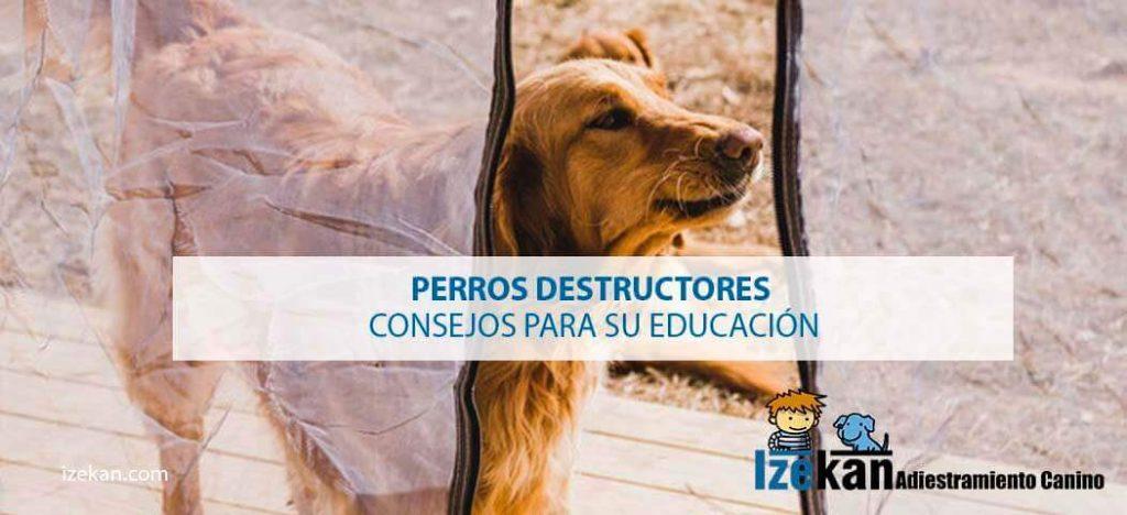 Perros destructores Consejos para su educación