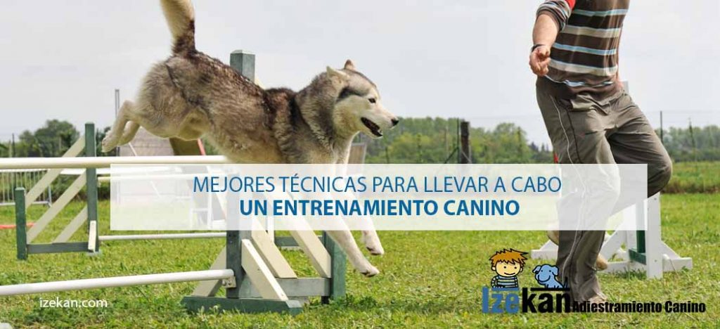 entrenamiento canino