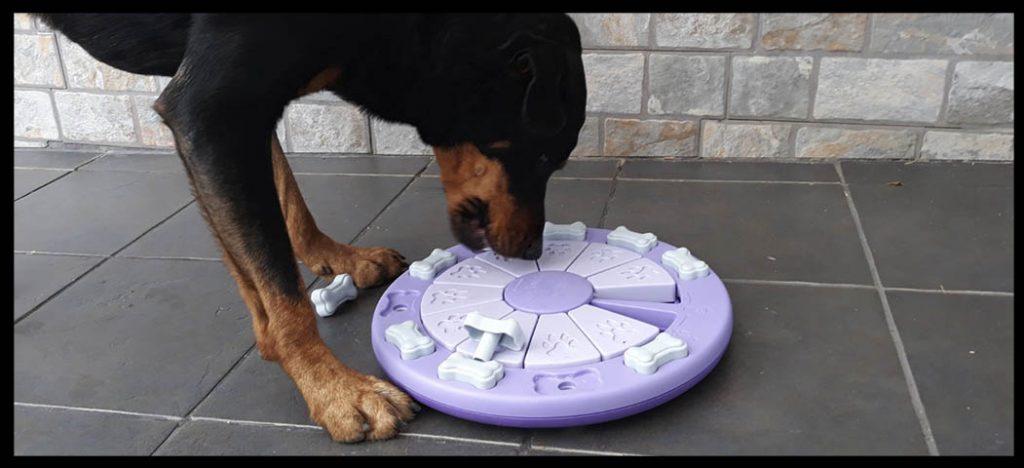 juegos para perros entretenidos y motivadores para tu mascota