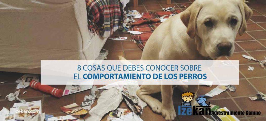 mal comportamiento de perros