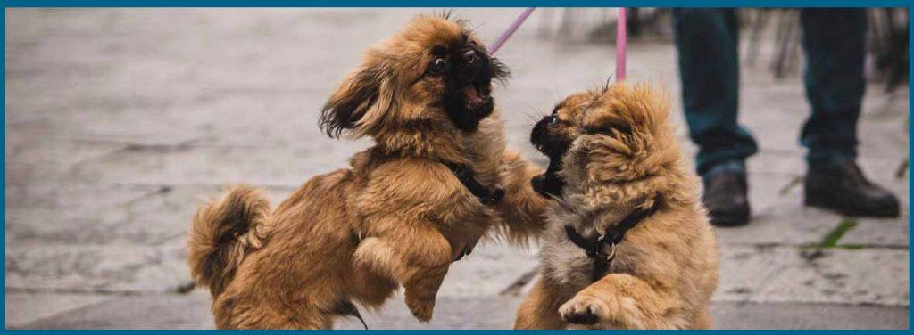 como quitarle el miedo a los perros