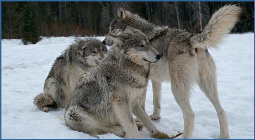 ¿Qué es un perro dominante? Aclarando conceptos