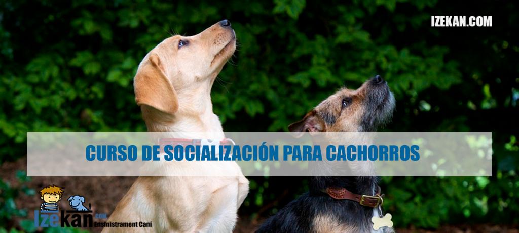 El mejor curso de socialización para cachorros
