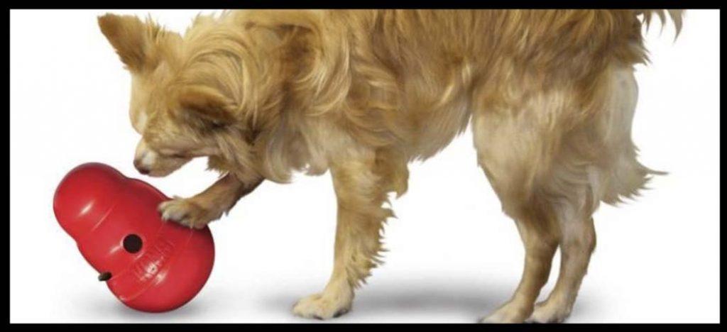 juguete wobbler kong para perros