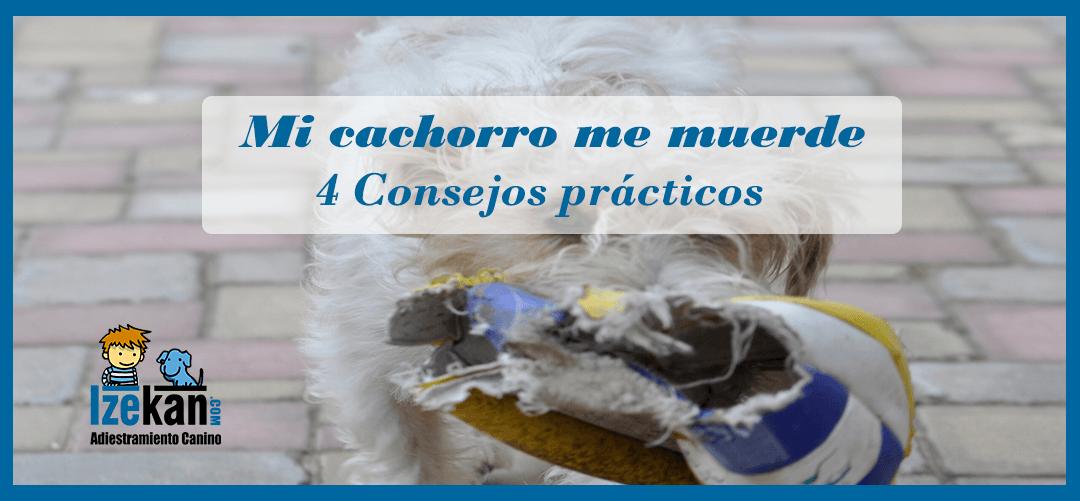 Mi Cachorro me Muerde 4 Consejos Prácticos