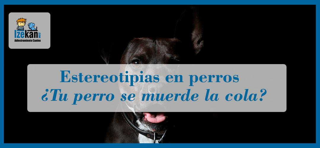 estereotipias en perros