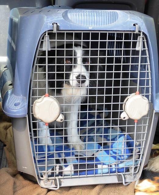 Post transportin para perros (1)